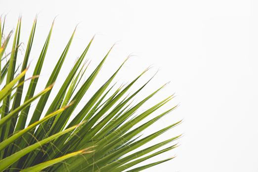 corner-leaf