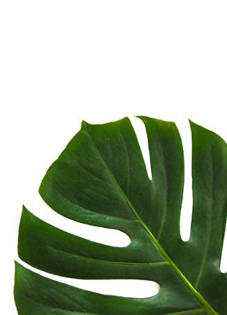 hero-leaf